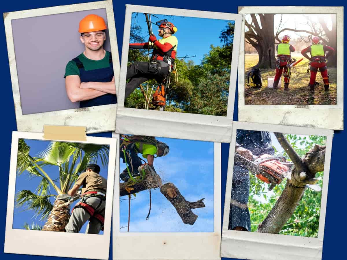 Prime Tree Service Collage